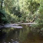 2011, Australia, B100, Erskine Falls, February, Great Ocean Road, Great Otway Park, Lorne, Victoria