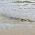 Adelaide River, Australia, Boat, Bush, Crocodiles, Crocs, cruise, Darwin, Flooding, Jumping, Kakadu, Kakadu National Park, Northern Territory, NT, plants, Tourism, Traditions, Travel, Trip, wildlife