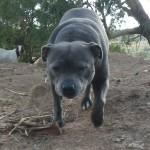 Wwoofing downunder 2011-03-1210