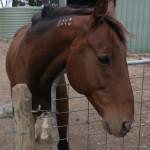 Wwoofing downunder 2011-03-1827