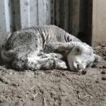 Wwoofing downunder 2011-03-232